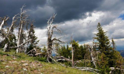 USA / Wyoming / Yellowstone National Park / Dwa swiaty