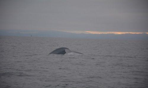 Zdjecie USA / Kalifornia / Zatoka Monterey / Polowanie na wieloryby