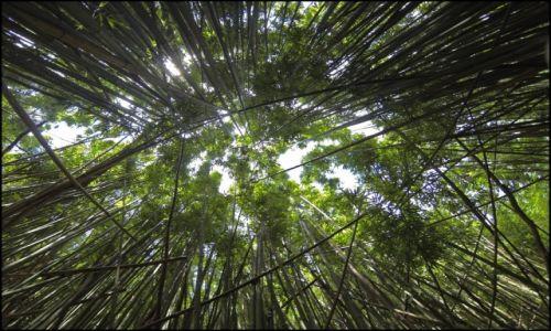 Zdjęcie USA / Oahu / Honolulu / Moana Trail