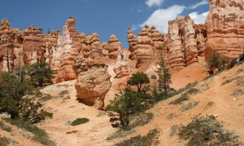 Zdjecie USA / Utah / Park Narodowy Bryce Canyon / Na szlaku