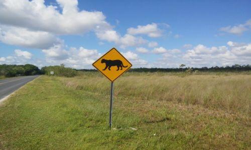 Zdjecie USA / floryda / park narodowy / puma