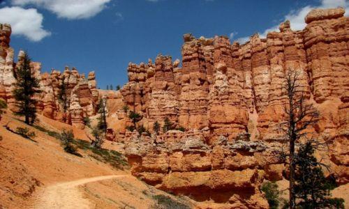Zdjęcie USA / Utah / Park Narodowy Bryce Canyon / Na szlaku