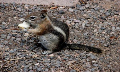 Zdjęcie USA / Utah / Park Narodowy Bryce Canyon / Smacznego