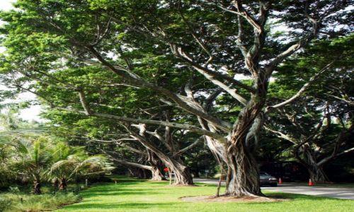 Zdjęcie USA / Florida / Jupiter / Niezwykłe drzewa
