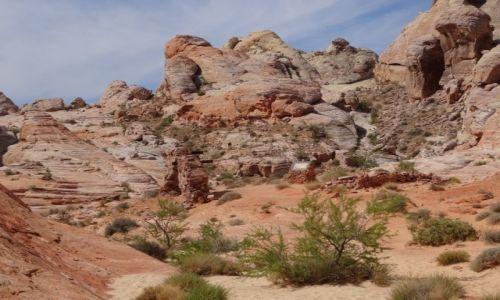 Zdjecie USA / Nevada / Dolina Ognia / Valley of Fire