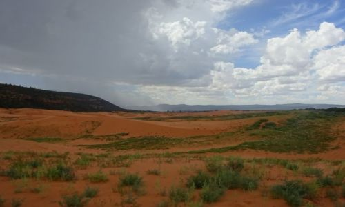 USA / Utah / Park Narodowy Koralowych Wydm / Coral Pink Sand Dunes NP - nadchodzi ulewa