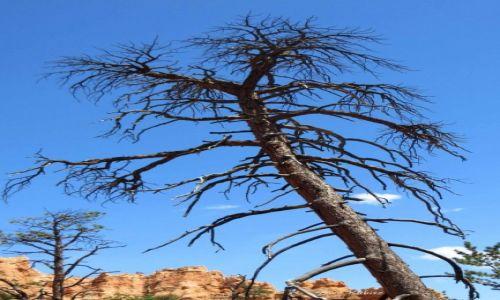 USA / Utah / Park narodowy Bryce Canyon / Tyle ze mnie zostało po pożarze
