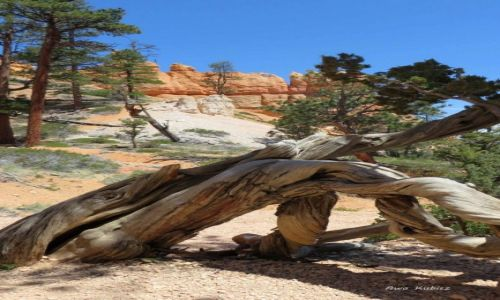 USA / Utah / Park narodowy Bryce Canyon / Ale mnie poskręcało!