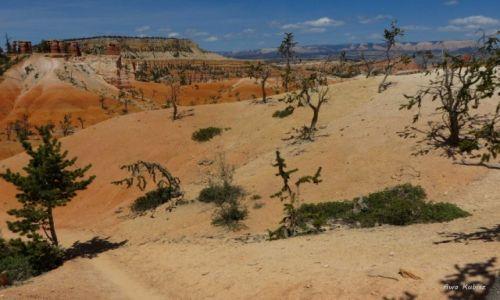 USA / Utah / Park narodowy Bryce Canyon / Oj, ciężko nam - ale trwamy!