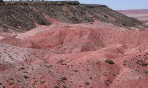 Zdjecie USA / Arizona / Malowana Pustynia / Painted Desert
