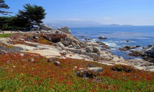 Zdjecie USA / Kalifornia / Big Sur / BIG SUR najpiękniejsza częśc kalifornijskiego wybrzeża