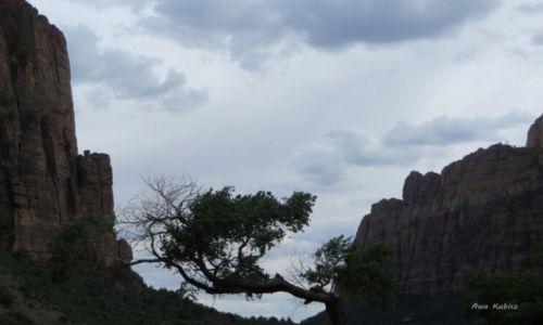 Zdjecie USA / Utah / Park narodowy Zion / Układam się do snu...