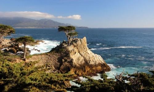 Zdjęcie USA / Kalifornia / Monterey / Cyprys na wiszącej skale