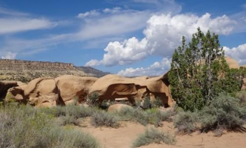 Zdjęcie USA / Utah / Escalante / Devils Garden