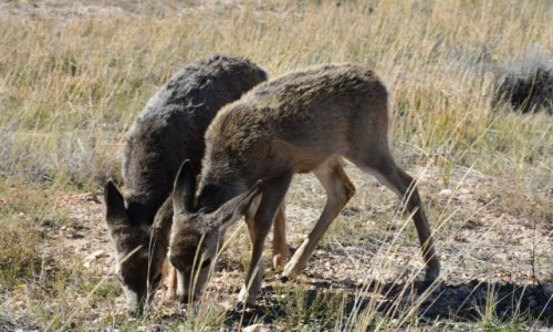Zdjecie USA / Utah / Bryce National Park / mulaki