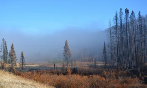 Zdjecie USA / Wyoming / Park Narodowy Yellowstone / Yellowstone