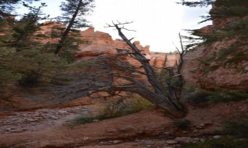 Zdjecie USA / Utah / Bryce Canyon National Park / na szlaku Navaj