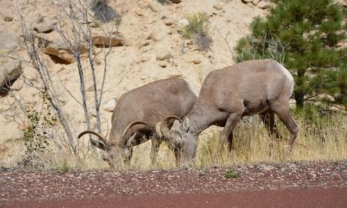 Zdjecie USA / Utah / Park Narodowy Zion / a tymczasem prz