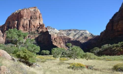 Zdjęcie USA / Utah / Park Narodowy Zion / Zion