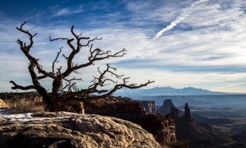 Zdjecie USA / Utah / Canyonlands / Drzewo nad kanionem