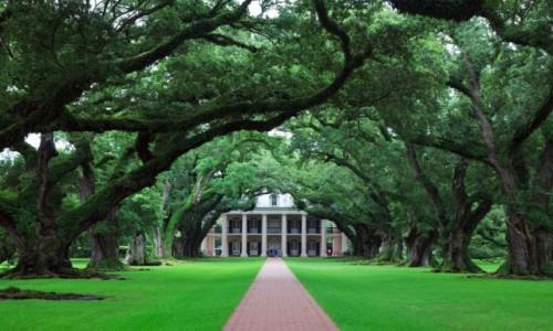 Zdjecie USA / Louissiana / Okolice New Orleans / Oak Plantation