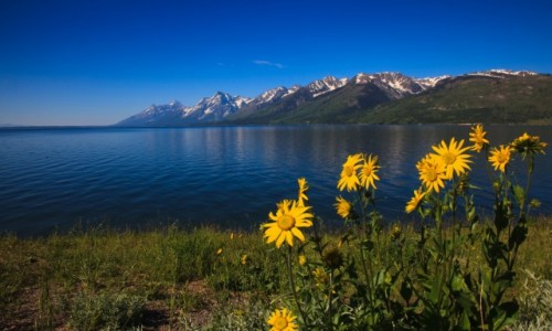 USA / Grand Teton / Wyoming / Grand Teton