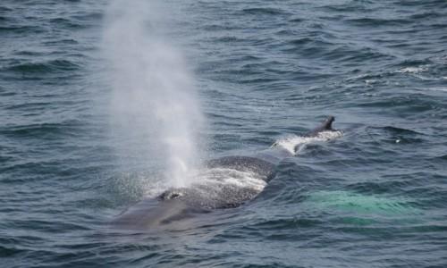 Zdjęcie USA / Boston / Stellwagen Bank National Marine Sanctuary / Wielorybi oddech