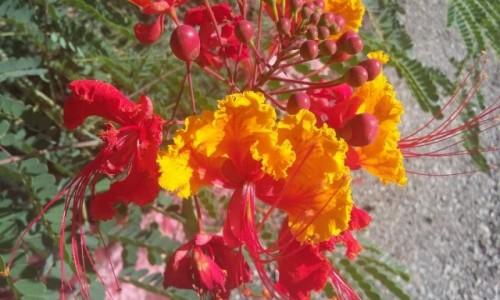 Zdjecie USA / Texas / San Antonio / Botanical Garden
