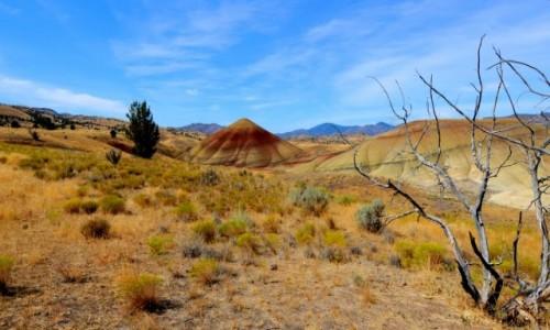 Zdjecie USA / Oregon / Painted Hills / Babka piaskowa