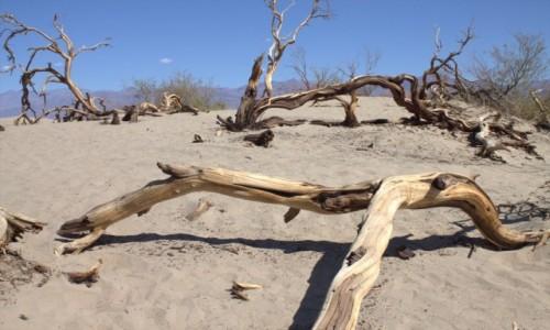 Zdjęcie USA / Death Valley / Mesquite Flat Sand Dunes / Pustynia