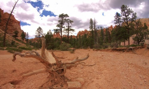 Zdjecie USA / Utah / Bryce Canyon / Koryto okresowej rzeki