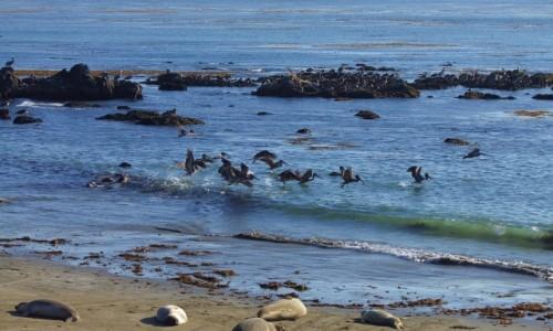 Zdjęcie USA / California / Wybrzeże californijskie / Uczta rybna
