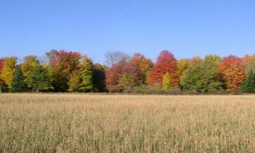 Zdjecie USA / Wisconsin / Wisconsin / jesień w Stanac