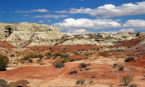 Zdjecie USA / Utah / Rimrock Toodstool Trial / Kolorowo, a więc pięknie!