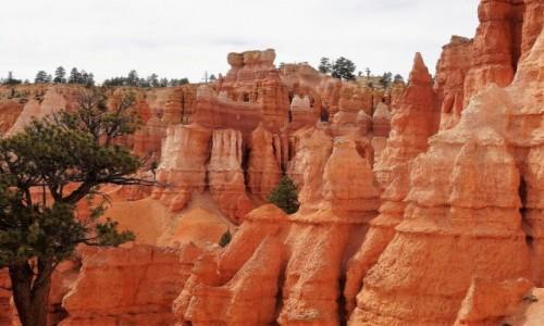Zdjecie USA / Utah / PN BRYCE / Tęsknię za czerwonymi skałami...