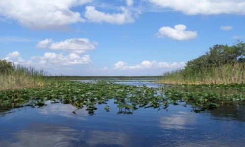 USA / Floryda / Park Everglades (UNESCO) / widok z Park Evergaldes