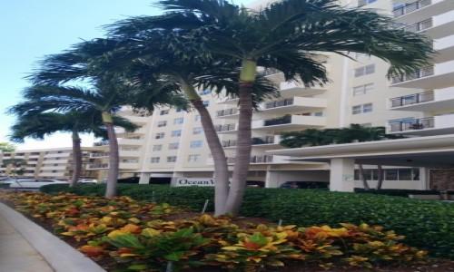 Zdjecie USA / Floryda / Miami / Kwietnik z krotonów :-)