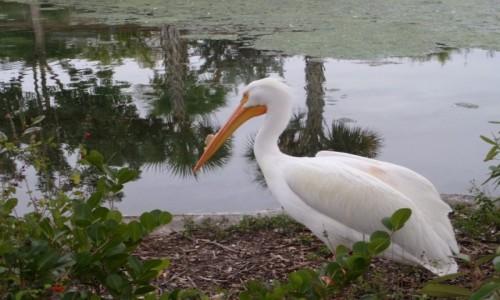 Zdjecie USA / Floryda / Miami / A ja mam zdjęcie takiego pelikana :-) Całkiem blisko był.