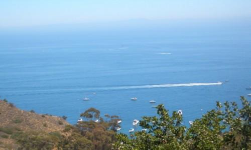 Zdjecie USA / Kalifornia / Catalina Island / Santa Catalina Island