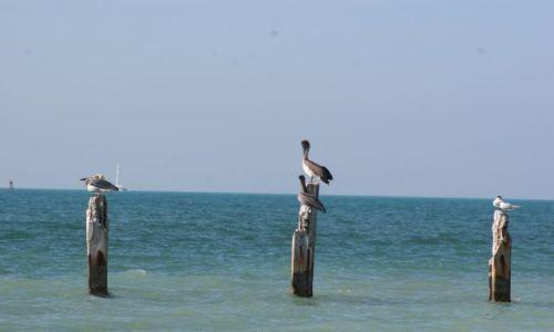 Zdjecie USA / Key West / Floryda / ptasia siesta
