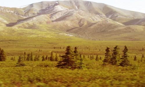 Zdjecie USA / Alaska / Alaska / Denali