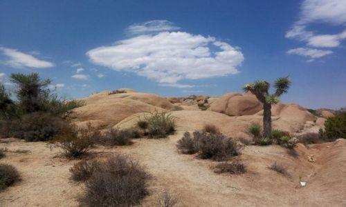 Zdjecie USA / brak / Kalifornia / pustynia Mohave w Kaliforni