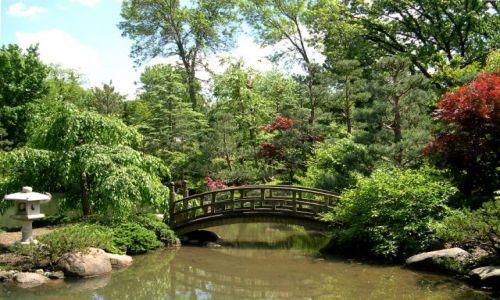 Zdjęcie USA / brak / Illinois / japonski ogrod