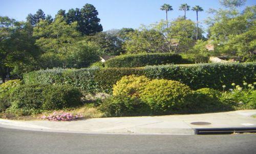 Zdjęcie USA / zachodnie wybrzeże / LOS ANGELES / Przyroda Zachodniego Wybrzeża