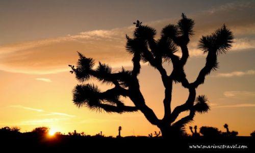 Zdjęcie USA / Kalifornia / Kalifornia / Joshua Tree