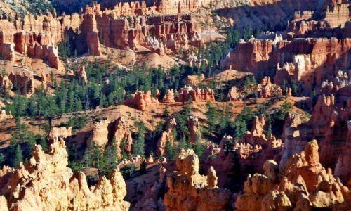 Zdjecie USA / brak / Utah / Bryce Canyon
