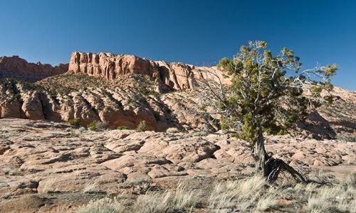Zdjecie USA / Arizona / Arizona / gdzieś w arizon