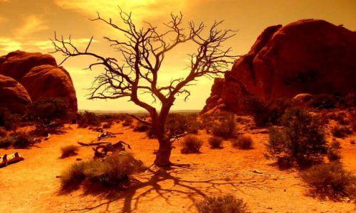 Zdjecie USA / Utah / Arches NP / Drzewo