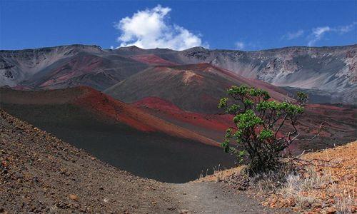 USA / Hawaje - wyspa Maui / Haleakala Crater / Wulkaniczna ro�linno��