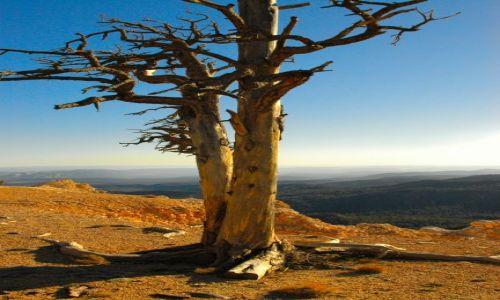 USA / Utah / Bryce National Park / Yovimpa Point / zachód słońca w Bryce